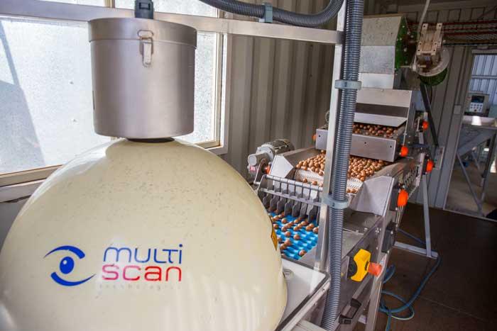 Macadamia MulitScan Machine